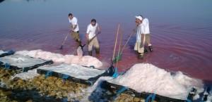 Les sauniers ramassent la fleur de sel.  Photo de Naema Serves